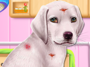 Labrador do filhote de cachorro Day Care