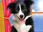Pet Dogs Cool Makeover